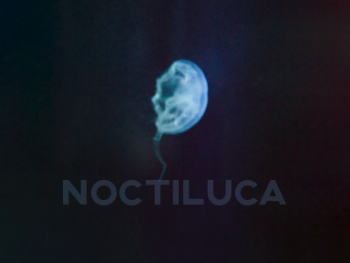 Noctiluca.art.group